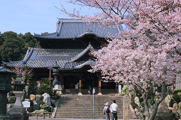 粉河寺の桜
