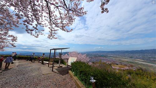 百合山の桜パノラマ